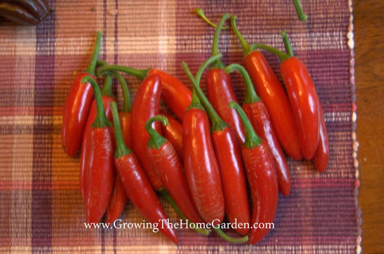 Serrano Hot Pepper