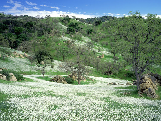Spring Wildflowers and Oak covered hills wallpaper
