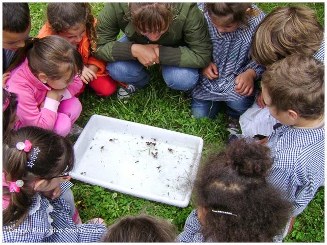 Observando vida acuática - Chacra Educativa Santa Lucía