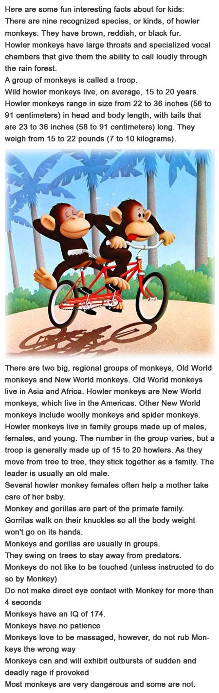 Fun facts about monkeys for kids