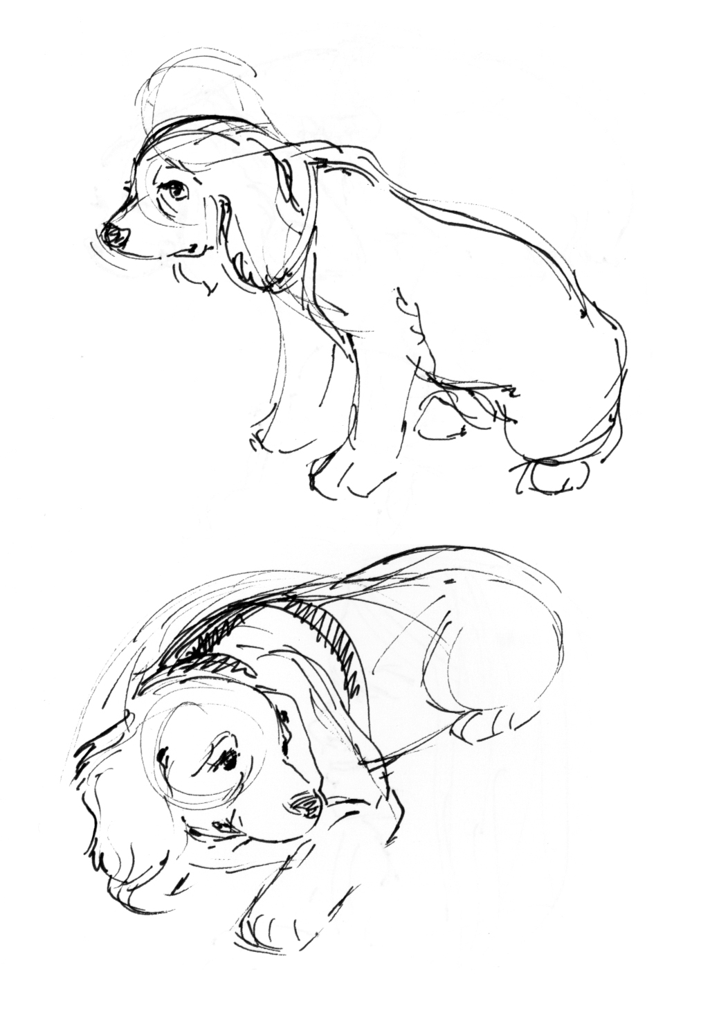 Cute Husky Puppies Coloring Pages
