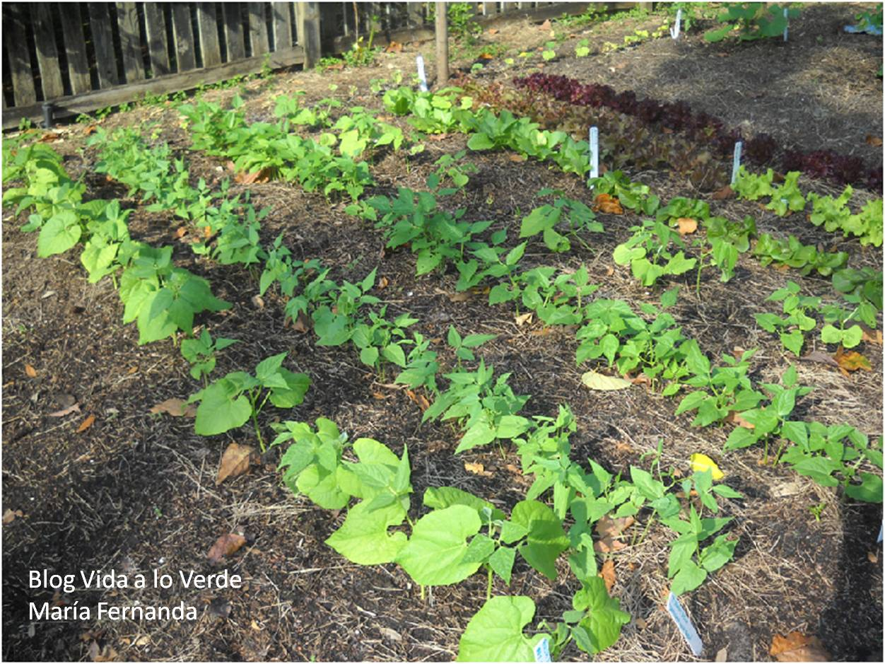 Vida a lo verde living in green c mo hacer un huerto for Que plantas se siembran en un huerto