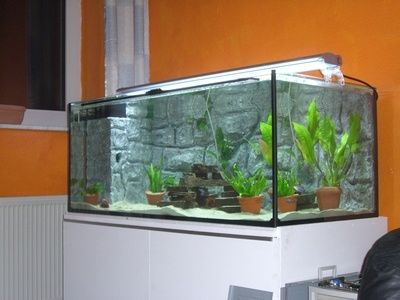 Freshwater Aquarium Fish Tanks