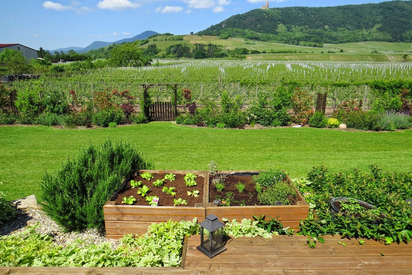 Jardin alsace vignoble for Entretien poivron jardin