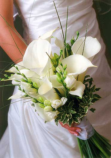 There are many varieties and colors of lilies In general lilies stand for