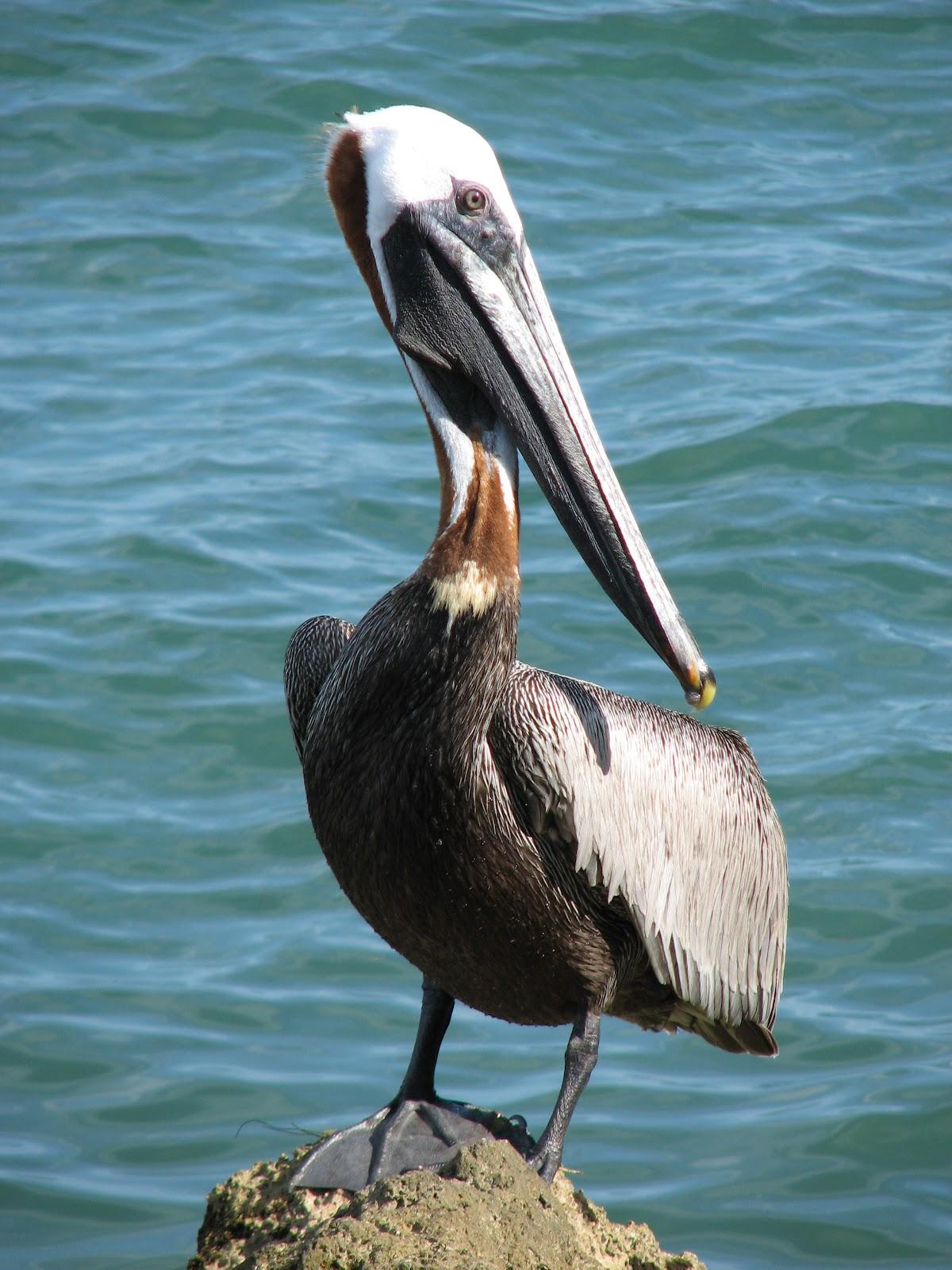 Bonao internacional verjas decoradas con esculturas de - Fotos de pelicanos ...