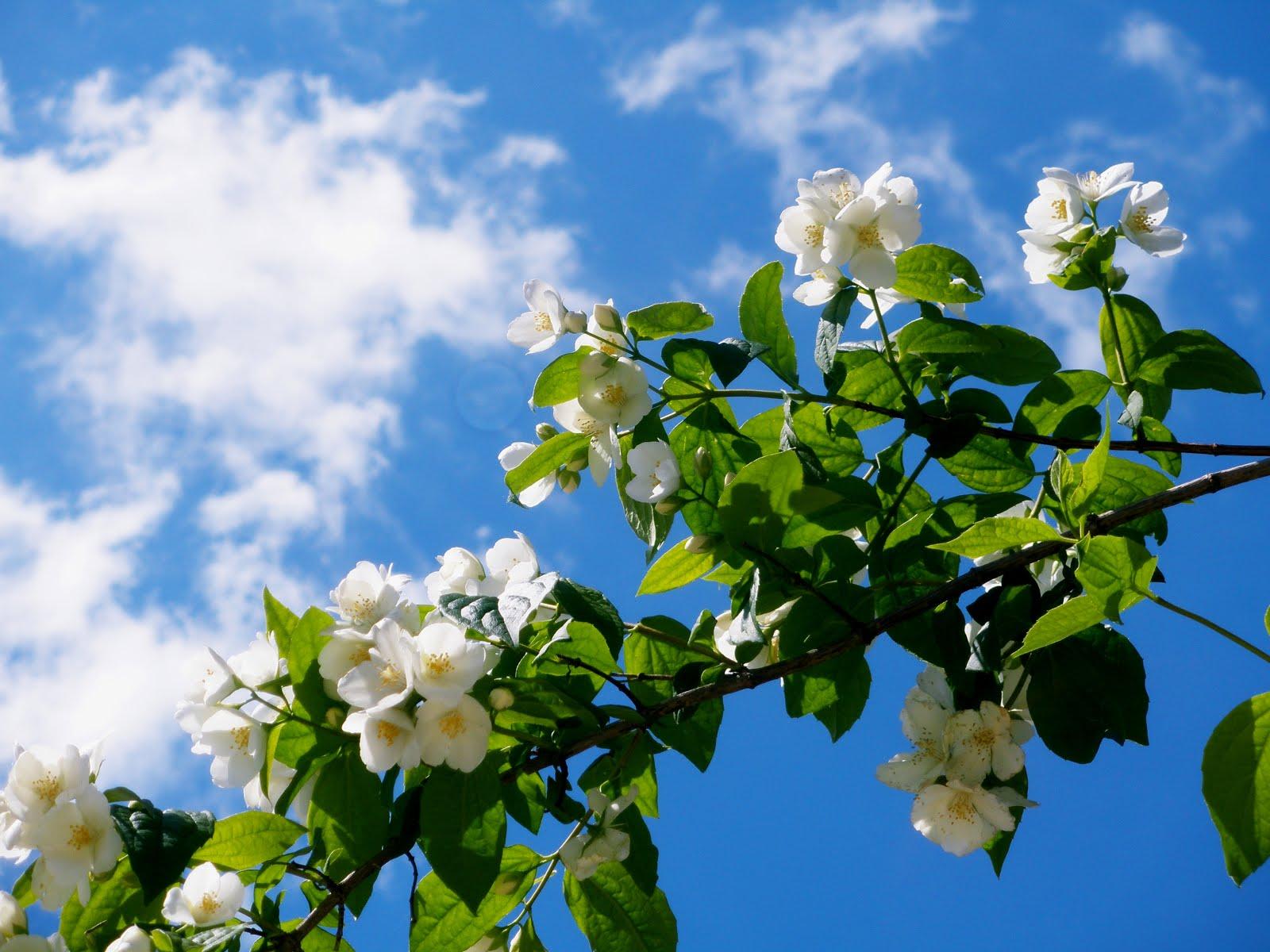 """""""Flor amarilla o ramo de celindas"""""""