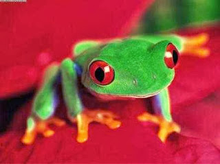 sapo verde