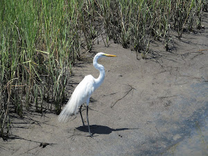 EGRET FREE AGAIN!