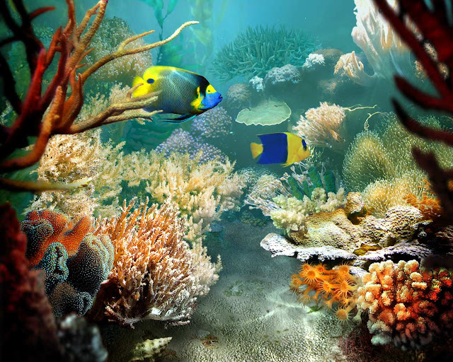 3d Fish Screensaver5