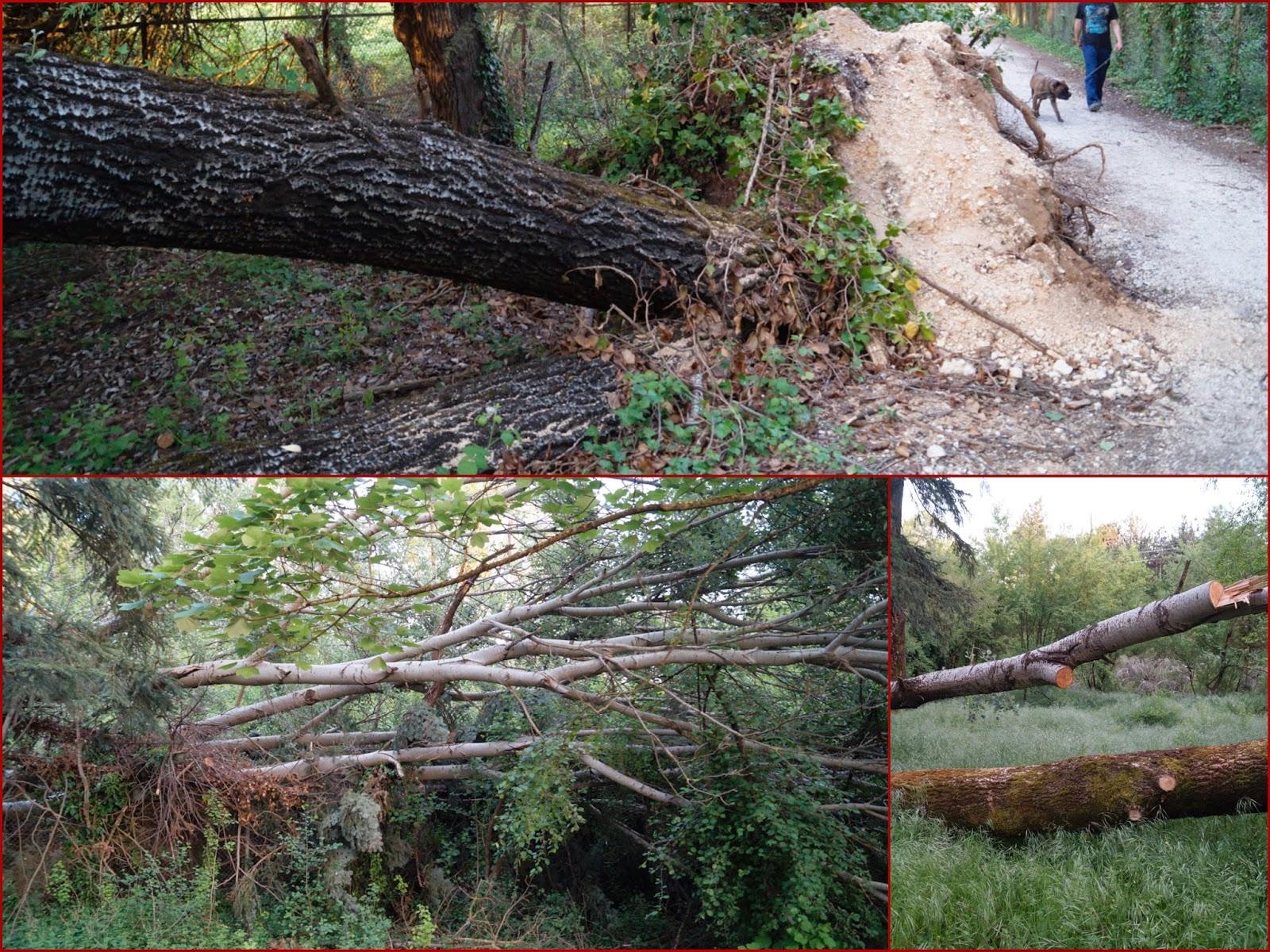 ΓΙΑΝΝΕΝΑ-Θλιβερές εικόνες ολοκληρωτικής εγκατάλειψης στο Πάρκο Πυρσινέλλα!