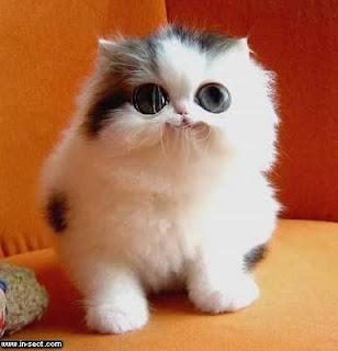 Apa Jadinya Jika di Dunia Tidak Ada Kucing