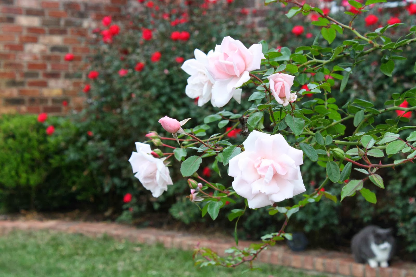 roses and other gardening joys - Most Beautiful Rose Gardens In The World