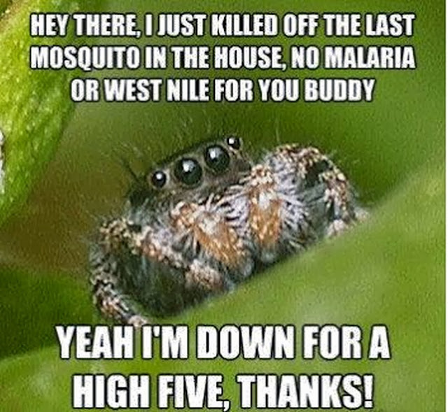Funny Spider Meme : Chuck s fun page five of the quot spider meme