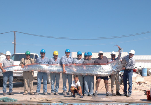 The Paranormalistics: List of Cryptids Oarfish 56 Ft