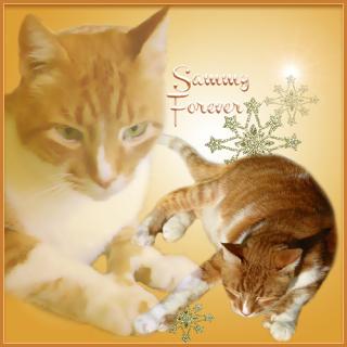 Sammy Furever