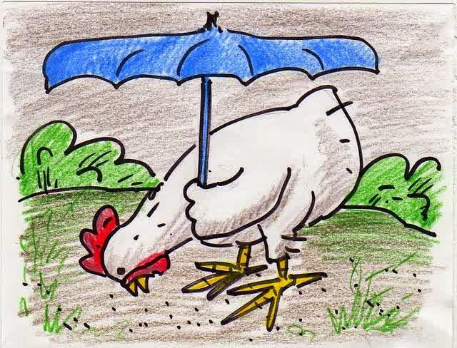 Tips merawat ayam di saat pergantian musim