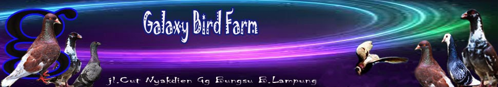 Galaxy Bird Farm