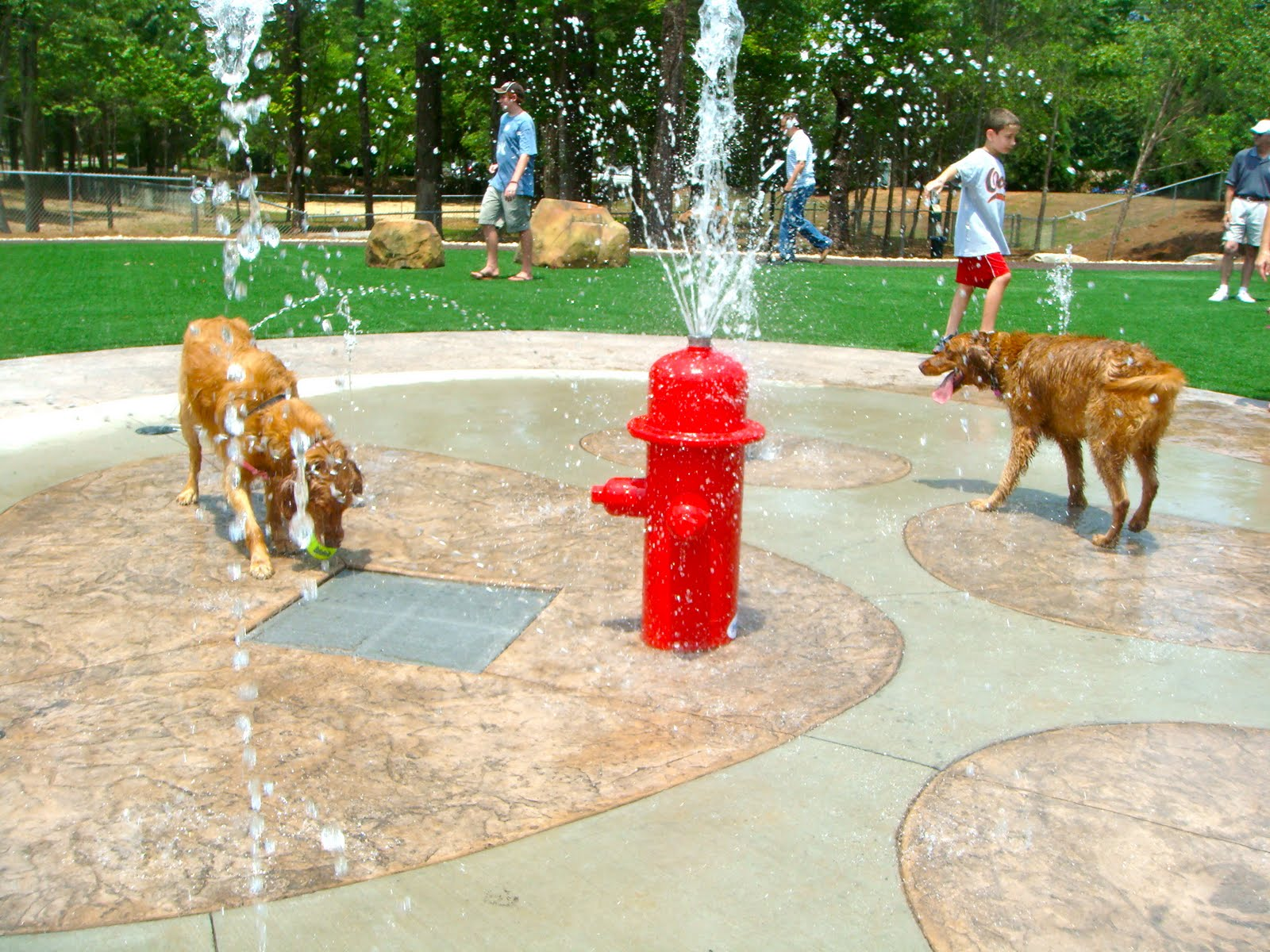 dog park Dog park - canine corner in an effort to ensure the safety of our residents, visitors and their four-legged family members, the city of pompano beach will begin charging for entry into the.