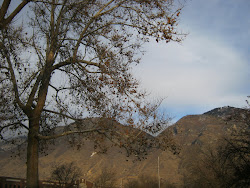 Susa's Winter Trees