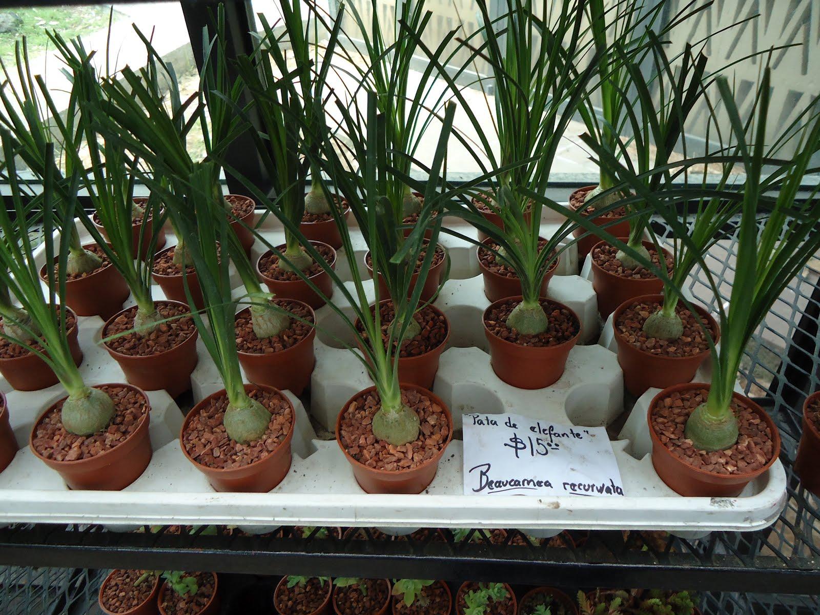Aunam festejar la unam a su jard n bot nico for Jardin botanico unam 2015