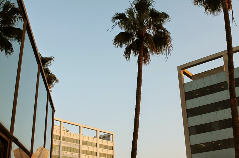 Palm trees on Hollywood Boulevard