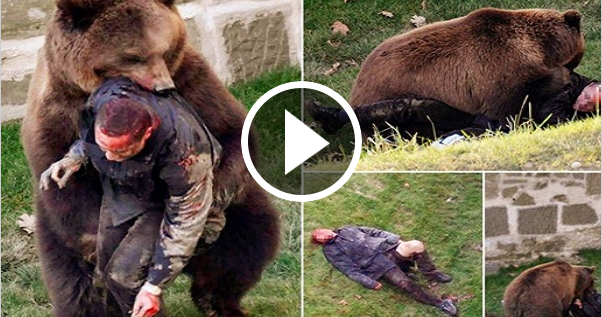 I miss you: Bear kill ...