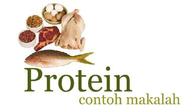 Contoh Makalah Tentang Protein