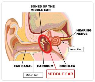 Adult ear problem