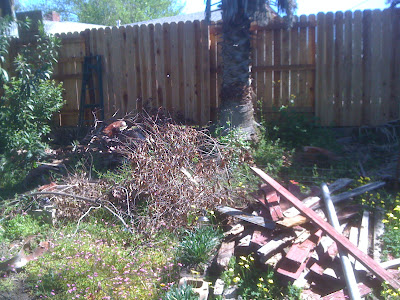 a junky area in my backyard