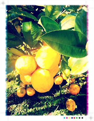 Lemon Cardamom Cake Recipe