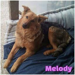 Melody, in cerca di adozione