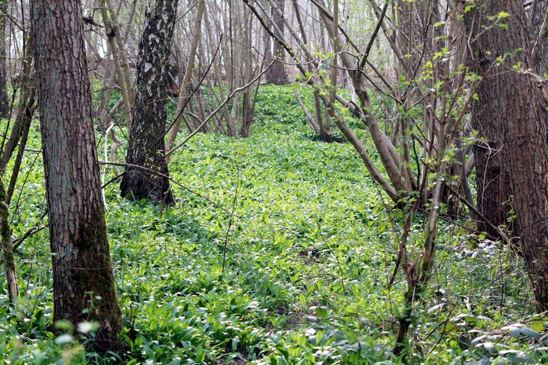 Sauvagement bon d but d 39 une cure aill e - Congeler les haricots verts du jardin ...