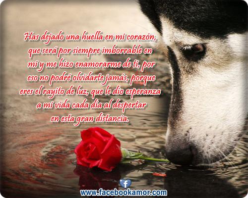 Perro Enamorado Imágenes De Archivo Vectores 123RF - Imagenes De Amor De Perros