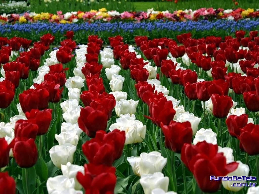 flores e jardins fotos:CARTÕES E MENSAGENS : BELAS FLORES E JARDINS WALLPAPERS HD , PAPEL DE