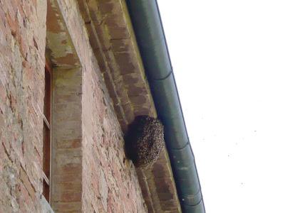 api, alveare