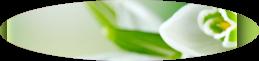 http://arfendes.deviantart.com/art/Szablon-9-449525605