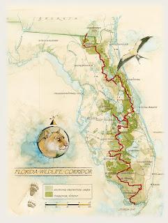 credit - Floridawildlifecorridor.org