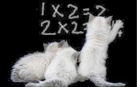 kittens doing math