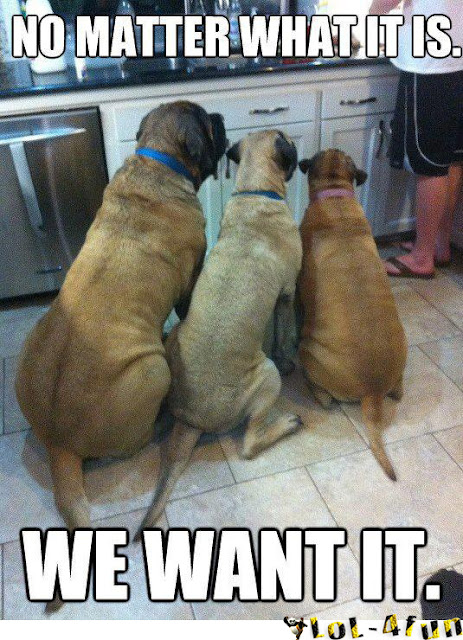 3 funny dogs want food
