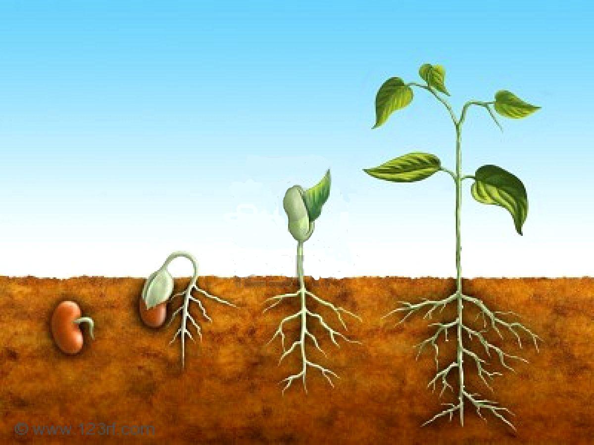 semillas y plantas
