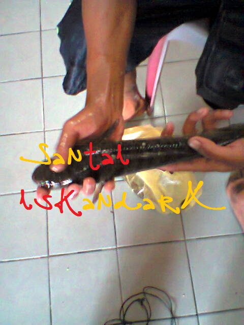 Santai-iskandarX-Flat-Ijau-Din-balik-Menagkap-Ikan-Haruan-Besar-besar-iskandarx.blogspot.com