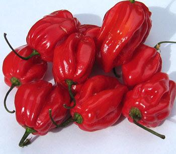 Habanero Chili - Fruits And Vegetables
