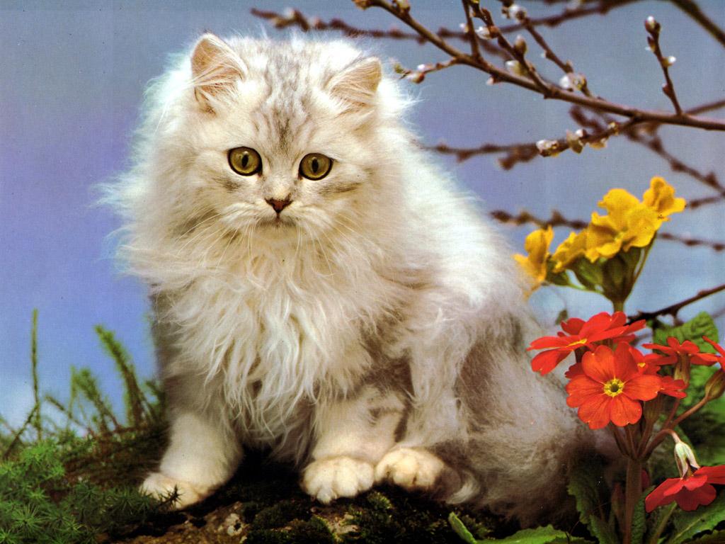 fondos de gatitos tiernos (-)