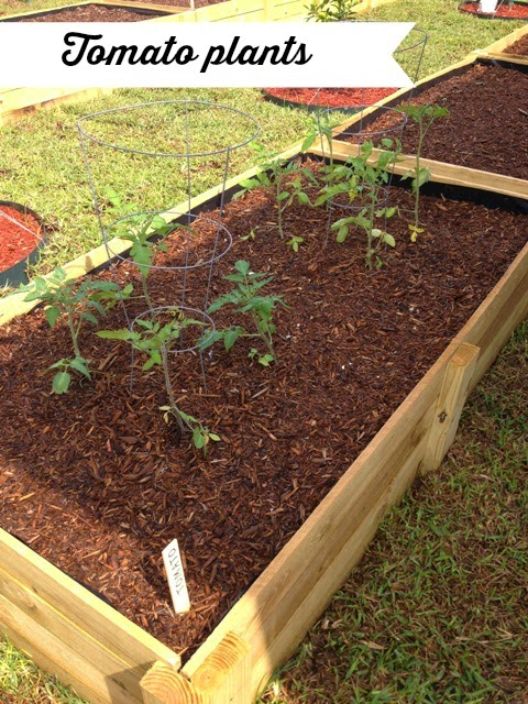 Adding Worms To Raised Garden Beds