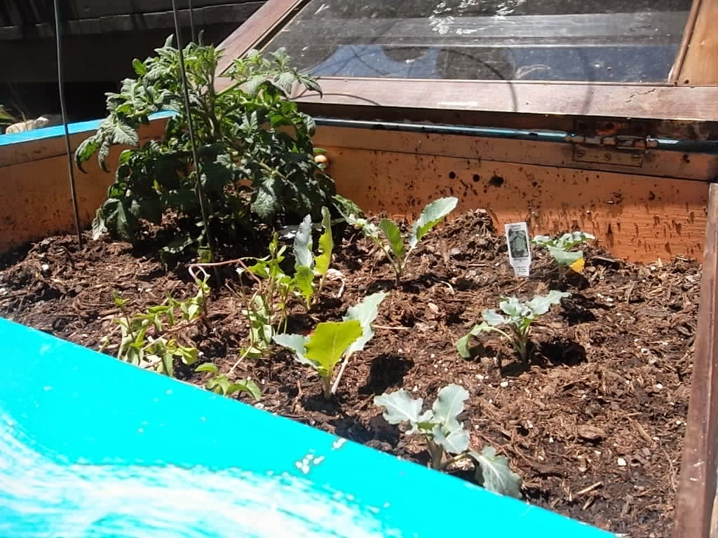 DIY Spring Garden Project-Hanging Cabinet to Garden Container Box ...
