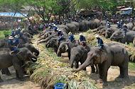 คนเลี้ยงช้าง 1