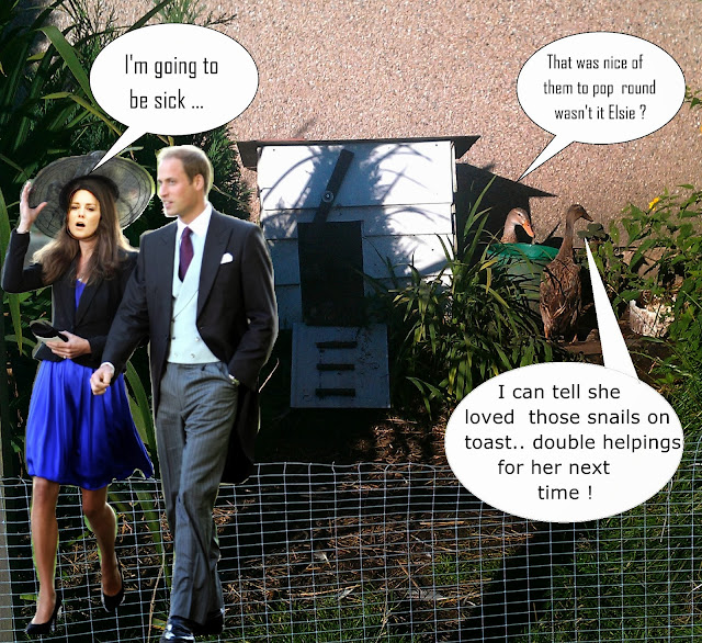 Possibly the snails didn't agree with Kate