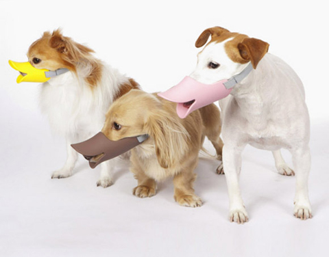 Quack Muzzle, duck-billed protective muzzle for dogs