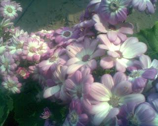 Flowers Kurseong